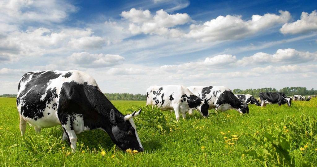 фермерское хозяйство полного цикла