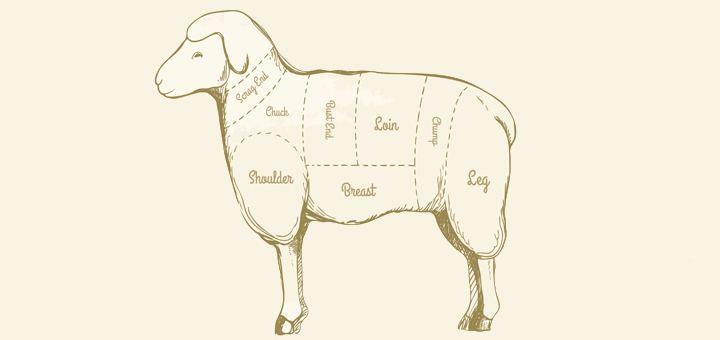 Овцеводство как бизнес: с чего начать?