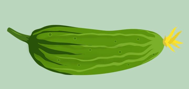 Выращивание огурцов в теплицах как бизнес