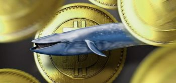 Биткоин-киты воспользовались резким падением криптовалюты