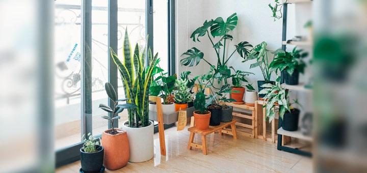 Выращивание декоративных растений в домашних условиях как бизнес