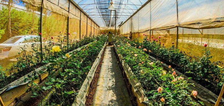 Животные и растения как источник дохода